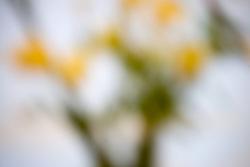 Strange effect of closeup of flowers,