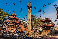 Pigeons surround the Pratapa Malla Column in  Durbar Square, Kathmandu, Nepal.