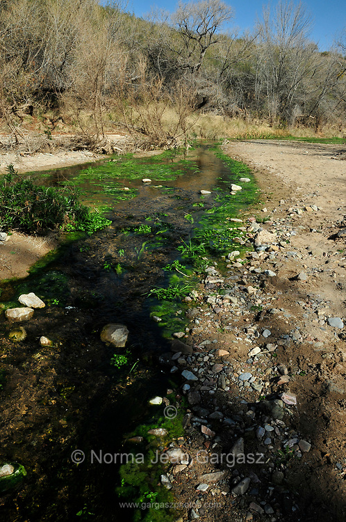 This creek is fed by runoff from the north end of the Santa Rita Mountains. <br />  It is located to the east of the Santa Rita Mountains. Cienega Creek Natural Preserve, Cienega Creek, a perennial creek channel, Marsh Station Road, Davidson Canyon, Gabe Zimmerman Trailhead, Arizona Trail, Vail, Arizona, USA.