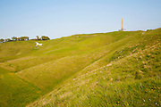 Scarp slope of White Horse on Cherhill Down and Lansdowne monument, Cherhill, Wiltshire, England, UK