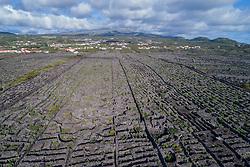 Luftaufnahme der Weingaerten auf der Insel Pico, Azoren / Aerial view of the vineyard on Pico Island, Acores
