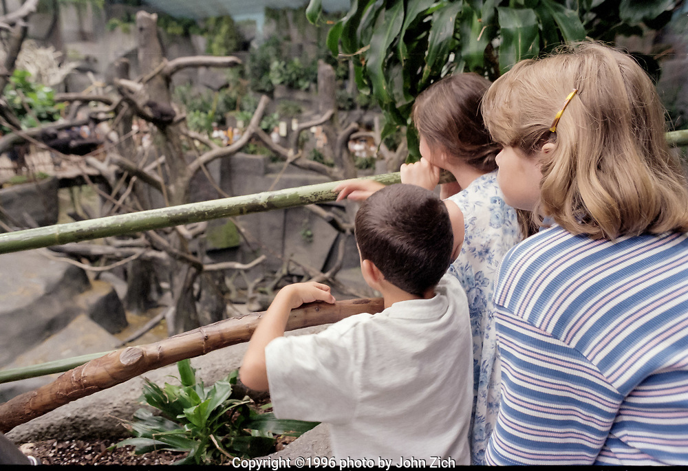 Visitors view gorillas from the elevated walkway of the gorilla enclosure at the Brookfield Zoo. (photo by John Zich)