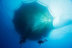 scuba diving workers, repairing 3,000-cubic-meter submersible fish pen installed in open ocean just off Kona Coast to raise Kona Kampachi, Hawaiian yellowtail, aka almaco jack or kahala, Seriola rivoliana, Kona Blue Water Farms, Big Island, Hawaii, USA, Pacific Ocean