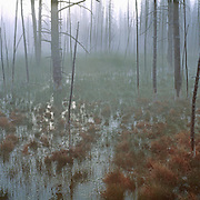 Light filters through the mist in a Yellowstone marsh. Wyoming