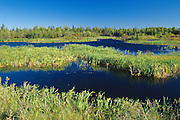 Wetland and boreal forest<br />  Yellowknife Highway<br /> Northwest Territories<br /> Canada