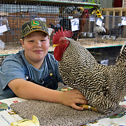 Boy and his Rooster at the Dutchess County Fair in Rhinebeck, NY