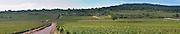 Vineyard. View over Montrachet vineyards. Puligny Montrachet, Cote de Beaune, c d'Or, Burgundy, France