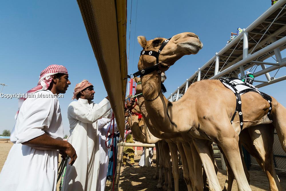 Start of camel race at racecourse in Dubai United Arab Emirates