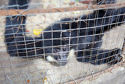 Pet Monkey At Monestary