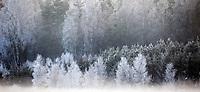 10.12.2014 gmina Krynki woj podlaskie N/z szadz na drzewach fot Michal Kosc / AGENCJA WSCHOD
