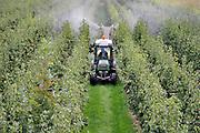 Nederland, Ooij, 14-9-2020Een tuinder rijdt door zijn perenboomgaard en spuit gewasbeschermingsmiddel op de peren, die rijp zijn voor de oogst. Foto: ANP/ Hollandse Hoogte/ Flip Franssen