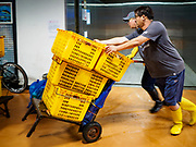 06 JUNE 2018 - SEOUL, SOUTH KOREA: Workers push boxes of just arrived fish to a shop in the Noryangjin Fish Market. The Noryangjin Fish Market is the largest fish market in Seoul and has been in operation since 1927. It opened in the current location in 1971 and was renovated in 2015. The market serves both retail and wholesale customers and has become a tourist attraction in recent years.       PHOTO BY JACK KURTZ