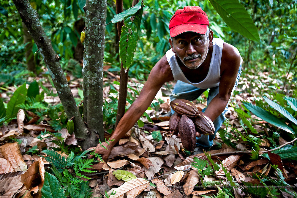 Raúl Hernández's plantation is situated on the steep slopes of the Sierra Madre in Chiapas and can only be reached by a footpath. Raúl has to carry the cocoa pods on his back during the forty minute walk down to his community. Tuzantán, Mexico.