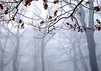 Heavy fog in Highgate Woods, London