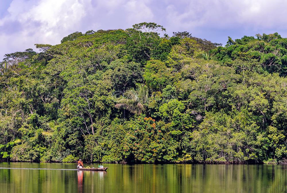 The rainforest at Garzacocha lake, La Selva, Ecuador