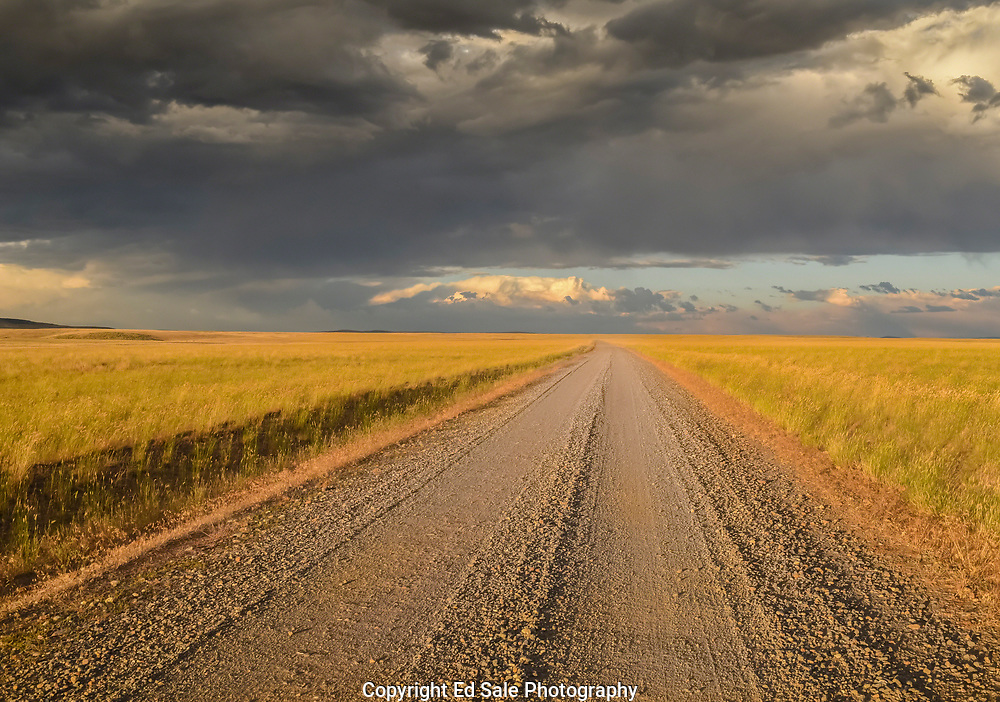 A  ranch road runs endlessly through  golden grassland at sunset while storm clouds gather overhead