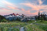 Summer wildflowers on Mazama Ridge with the Tatoosh Range in the background - in Mount Rainier National Park, Washington State, USA