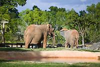 Elephants at Bush Gardens Zoo, Tampa, Florida, USA