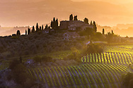 Tuscany vineyard field with a villa on the hill at sunrise