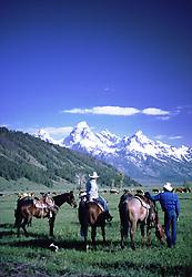 Cattle Drive, Grand Tetons, Jackson Hole, Wyoming