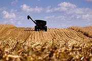 30 SEPTEMBER 2020 - WOODWARD, IOWA: A trailer in a cornfield on Lambert family land in Woodward. Kevin Lambert said it would take nearly twice as long to combine this year's corn compared to last year's because of damage to fields caused by the derecho wind storm that roared through central Iowa in August. The derecho wind storm damaged more than 550,000 acres of Iowa cornfields. In addition to derecho damage, Iowa farmers are wrestling with drought related damage. A persistent drought in central Iowa has stunted corn plants and reduced yields. Because of the unusually dry weather, this year's harvest is three weeks ahead of last year's and nine days ahead of average.        PHOTO BY JACK KURTZ