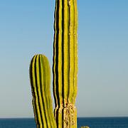 Baja California, Mexico, America
