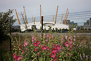 Flowers near to The O2, once the Millennium Dome in London, United Kingdom.