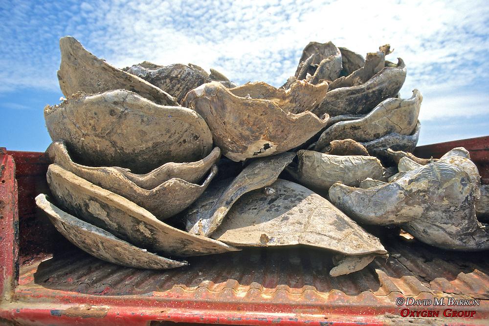 Turtle Carapaces