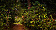 A trail passes through a forest canopy on the Kitsap Peninsula in Puget Sound, WA, USA