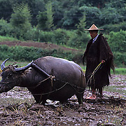 China, People, Portrait of farmer working in rice fields.
