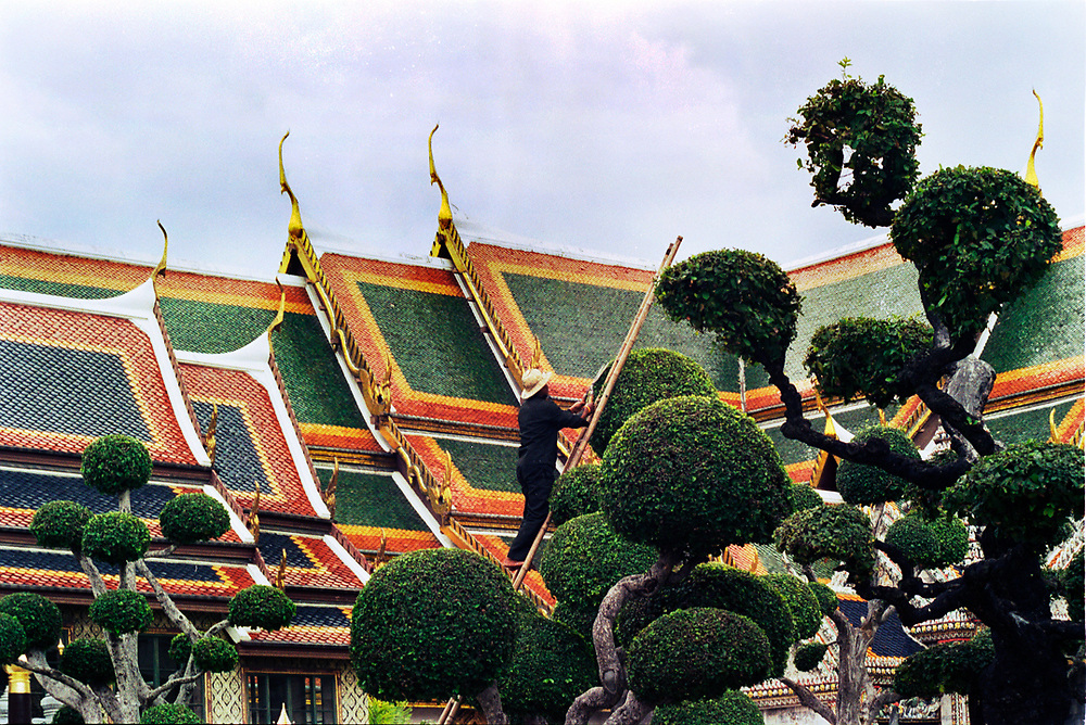 A gardener is shaping an Ilex Crenata tree inside the Royal Palace in Bangkok, Thailand.<br /> Photo by Lorenz Berna
