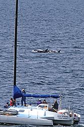 Orca & Sailboat