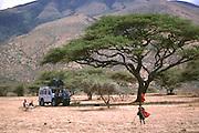 Acacia tree on the Serengeti