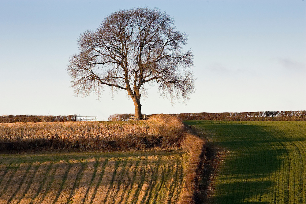 Arable land in Asthall Leigh, Oxfordshire, United Kingdom