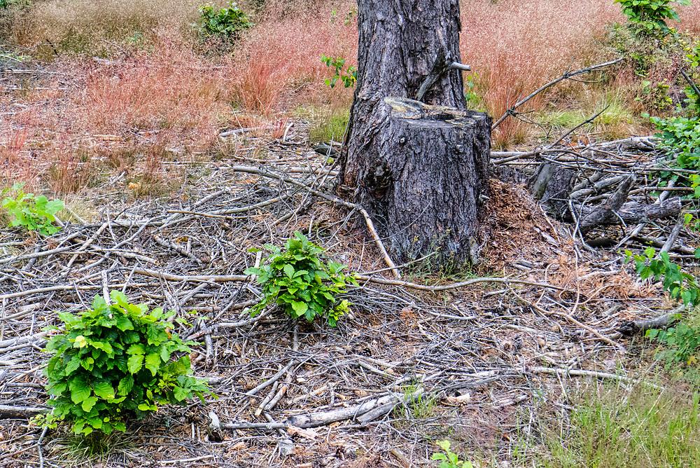 Kaszubski las w okolicach miejscowości Wdzydze Kiszewskie.
