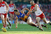 Simon Black of Brisbane and Rhyce Shaw of the Swans contest the ball during the AFL Round 24 match between the Sydney Swans and the Brisbane Lions at the SCG, Sydney.