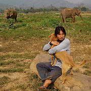 CHIANG MAI, Thailand - MARCH 1, 2006: A mahout, or keeper, and his dog keep watch while elephants graze. Mahouts are very important, even on parks and reserves, to make sure the elephants do not cross into farmers lands and eats crops or damage property. Asian elephants - strong, social, and intelligent - have been trained for thousands of years for use in transportation, labor, and ritual. In Thailand, Elephants are of immense cultural importance, but their numbers are shockingly plummeting. In 1905, there were over 100,000 elephants in this land - now they are estimated at less than 5,000, of which barely half are in the wild. (Photo by Logan Mock-Bunting)
