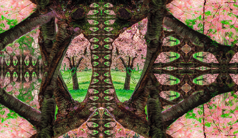 """""""Cherry Blossoms Nirvana"""", derivative image created from a photo of cherry trees in bloom, overcast light, March, Washington Park Arboretum, Seattle, WA, USA"""