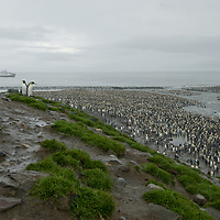 Eco-tourists from the National Geographic Endeavor overlook hundreds of thousands of King Penguins at a rookery at Saint Andrews Bay, South Georgia, Antarctica.