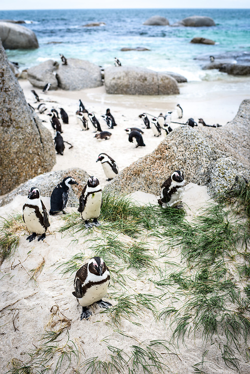 Boulders Beach <br /> Simon Town, South Africa