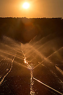 Goshen, New York - Irrigations sprinklers water a farm field at sunseton June 24, 2016.