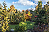 Fall foliage colours in the Japanese Maples and other trees at the Quarry Gardens in Queen Elizabeth Park - Vancouver, British Columbia, Canada.  The Bloedel Conservatory is in the background.