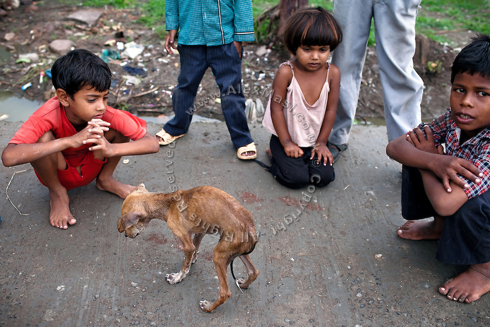 Children in the impoverished Oriya Basti colony are looking over a severely ill dog, in Bhopal, Madhya Pradesh, India, near the abandoned Union Carbide (now DOW Chemical) industrial complex.
