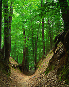 Sunken Trace, deeply eroded secton of the original Natchez Trace at mile 41.5 of the Natchez Trace Parkway, Mississippi.