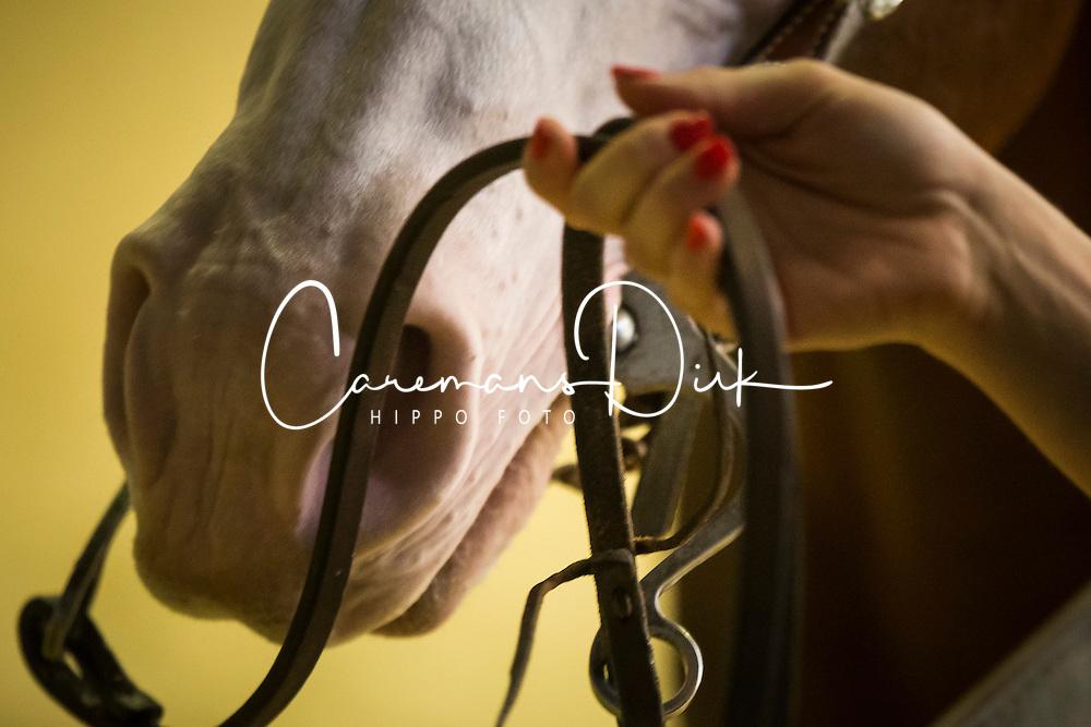 Josiane Gauthier, (CAN), Ju Juzz Gunslinger - Horse Inspection Reining  - Alltech FEI World Equestrian Games™ 2014 - Normandy, France.<br /> © Hippo Foto Team - Dirk Caremans<br /> 25/06/14