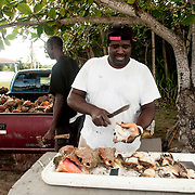 South Eleuthera conch fisherman crack the days catch. They use their pickup truck to transport the conch to the market parking lot so locals and tourists can have a chance to purchase the animal as it is being de-shelled. Conch are the national food of the Bahamas.