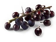Whole fresh Sloe berries on a twig