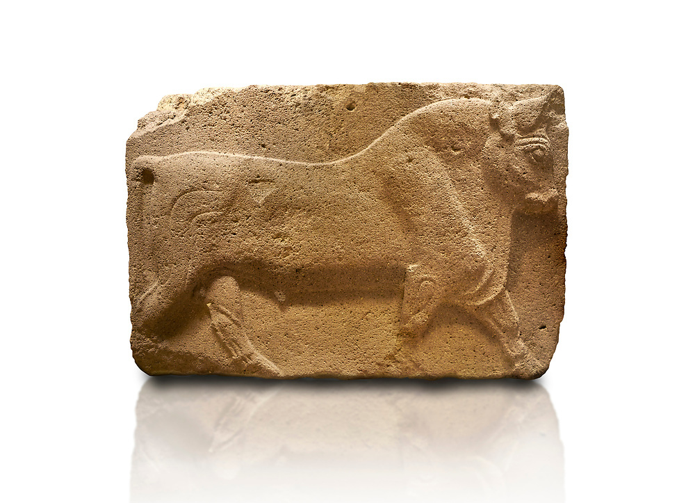 Phrygian relief sculpted orthostat stone panel, 1200-700 B.C. Anatolian Civilisations Museum, Ankara, Turkey. Figure of a walking bull. <br /> <br /> Against a white background. .<br /> <br /> If you prefer you can also buy from our ALAMY PHOTO LIBRARY  Collection visit : https://www.alamy.com/portfolio/paul-williams-funkystock/phrygian-antiquities.html  - Type into the LOWER SEARCH WITHIN GALLERY box to refine search by adding background colour, place, museum etc<br /> <br /> Visit our CLASSICAL WORLD PHOTO COLLECTIONS for more photos to download or buy as wall art prints https://funkystock.photoshelter.com/gallery-collection/Classical-Era-Historic-Sites-Archaeological-Sites-Pictures-Images/C0000g4bSGiDL9rw