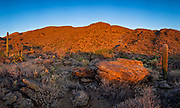 Javelina Picnic Area, Saguaro National Park