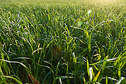 Summer grass